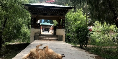 'One Health': the middle path for Rabies control in Bhutan and beyond