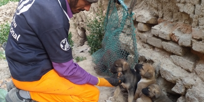 Mayhew Afghanistan on track to eliminate rabies in Kabul