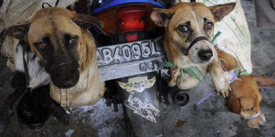 Going Dog Meat-Free in Indonesia to Help End Rabies