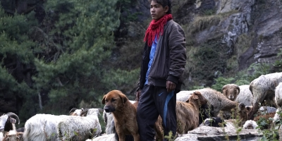 Reducing human-dog-wildlife conflict in Nepal