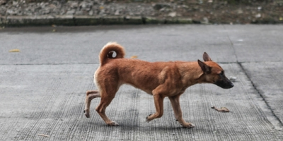 Free-roaming dogs are a problem caused by people