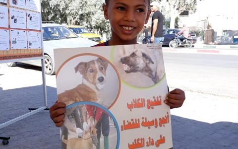 How students are creating a rabies-free Tunisia